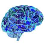 Neurosciences, ce que les DRH doivent savoir